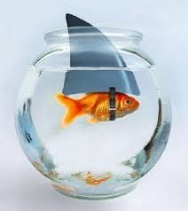 A goldfish wearing a shark fin.